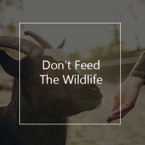 things not to do when you travel - don't feed the wildlife