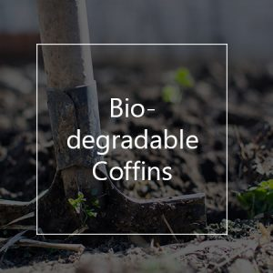 the biodegradable coffins as a green innovation